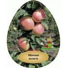 Яблоня Валюта (1 год) ( V-4 литра, H-1,2 м) колоновидная, подвой карликовый М9 ОСП