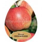 Яблоня карликовая Приземленное (в коробке) (осенний, зеленовато-желтый с красным румянцем)