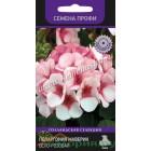 Цветы Пеларгония Маверик Бело-розовая F1 5 шт ц/п Поиск К
