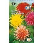Цветы Георгина Скоморохи, кактус смесь 0,2 г ц/п Седек