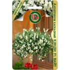 Цветы Антирринум каскадный Кэнди Вайт F1 5 шт ц/п Биотехника
